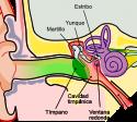 trastornos del oído medio